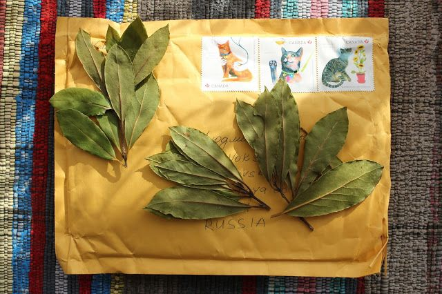 Жизнь горожанки в деревне: (+14)     Лавровые листья с острова Ванкувер