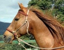 Just ordered this. I hope it fits my horse! LightRider Bitless Bridle - Rope Natural - Natural Horse World