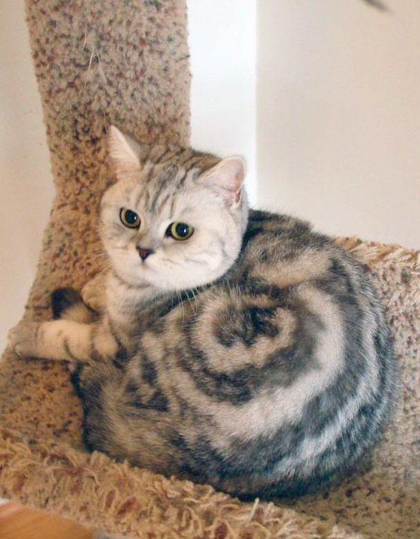 Beautiful Cats And Kittens Photos Beautiful Cats In Pakistan Cute Animals Cute Cats Beautiful Cats