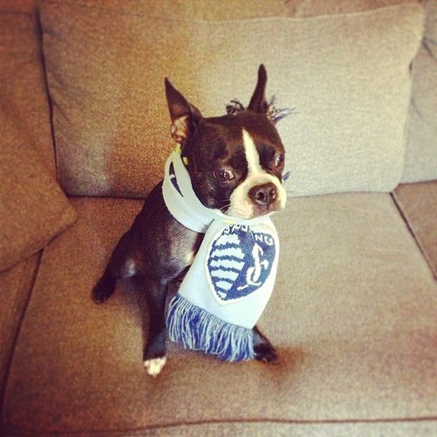 Best Sporting KC Images On Pinterest Kansas City Soccer And - Sporting kc car decals