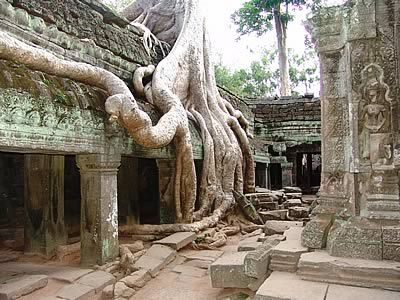 Angkor Wat complex, Cambodia. Ta Phrom Temple and strangler fig ...