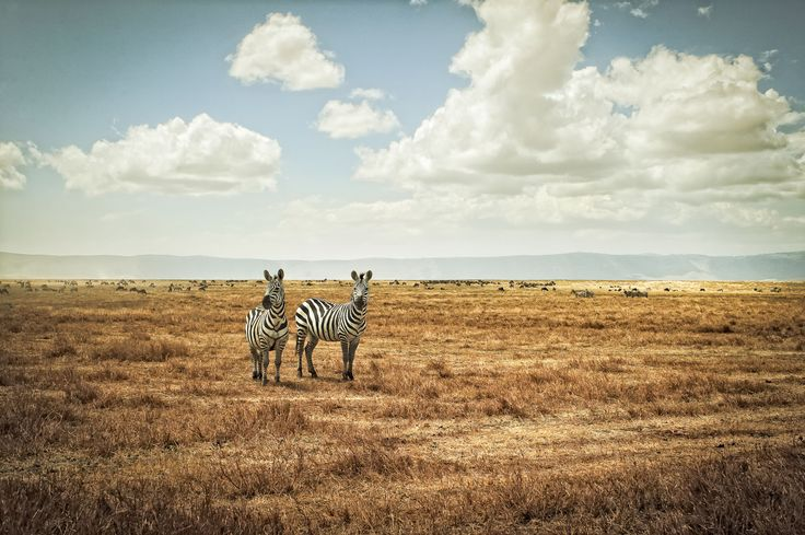 African Landscapes by Justin Carrasquillo