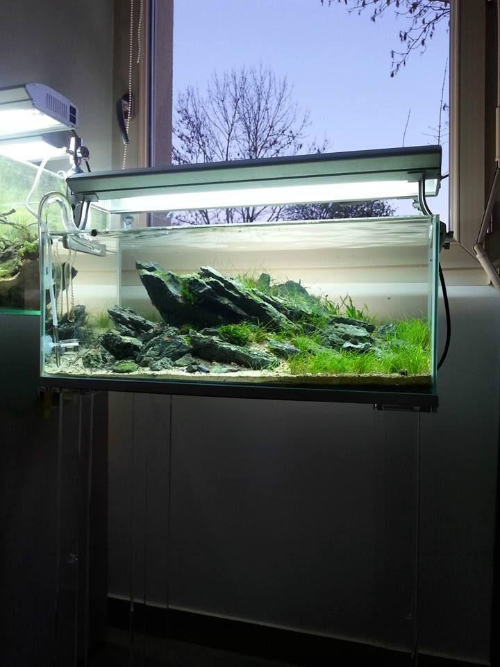 172 besten malawi tank bilder auf pinterest aquarien. Black Bedroom Furniture Sets. Home Design Ideas