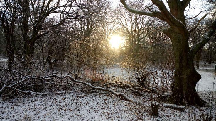 #winter #snow #natuur #geversduin