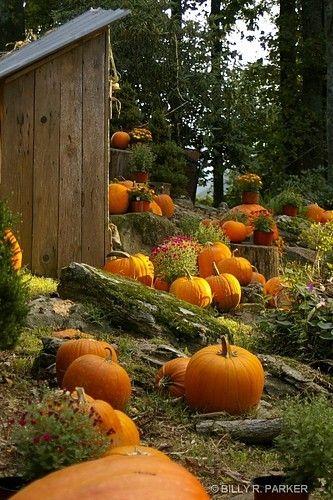 Pumpkins!#diamondcandles and #harvestcontest2012