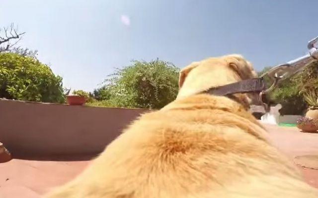 GUARDA SUBITO IL VIDEO di questo magnifico cane, secondo voi ama l'acqua? #video #cane #gopro