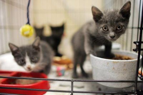 Stop feeding the kitten formula during the seventh week.