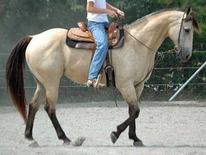 Appendix Horse (Thoroughbred x Quarter Horse)