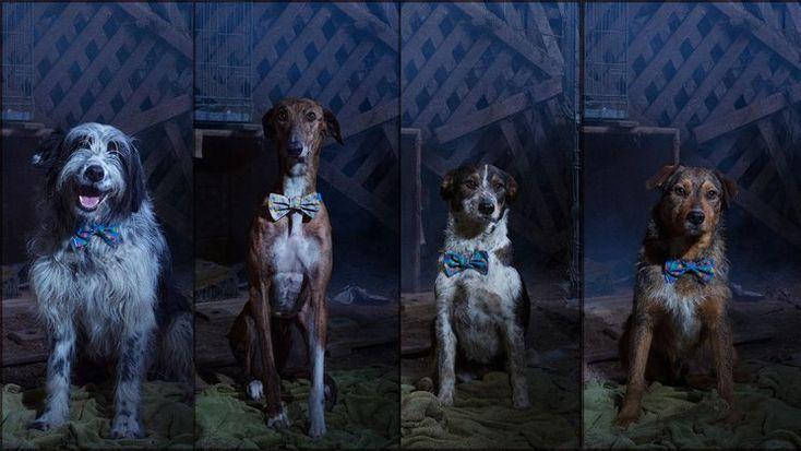 #CORTOMETRAJE #CINE #CROWDFUNDING  Cuando Lucas encontró a Eva.  Tres voluntarios de una protectora de animales salen al rescate cuando ven por Facebook un aviso de un grupo de perros abandonados en una casa. Para Eva es su primer rescate. Finalmente la noche se les echará encima … y Lucas ayudará a Eva tomará una decisión que cambiará su vida para siempre. Crowdfunding verkami: http://www.verkami.com/projects/15080-cuando-lucas-encontro-a-eva