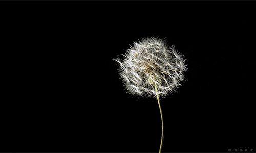 Lass die Vergangenheit gehen... es ist, wie eine Pusteblume in den Wind zu halten: zum richtigen Zeitpunkt werden sich die Samen verbreiten. - Keith Donohue - .. Lascia andare il passato... è come tenere un soffione al vento: al momento giusto i semi si spargeranno. - Keith Donohue - ~ gesehen bei: Paleobarattolo https://www.facebook.com/Paleobarattolo.it/