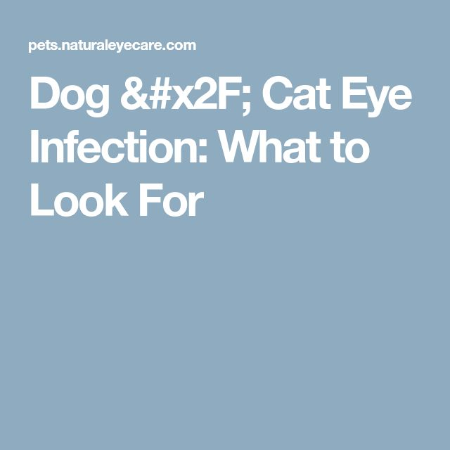 Dog / Cat Eye Infection: What to Look For