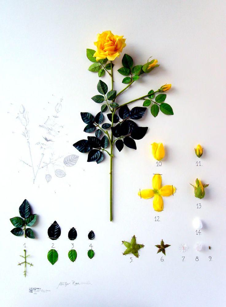 Alberto Barraya, Herbarium of Artificial Plants