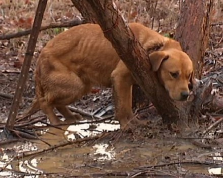 Dog tied to tree in freezing weather in Memphis (click to read)