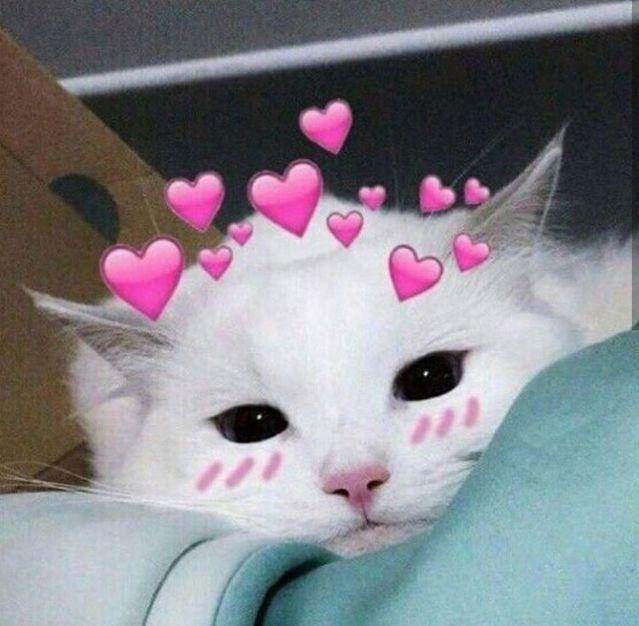 Мужчине, картинки котики с сердечками над головой