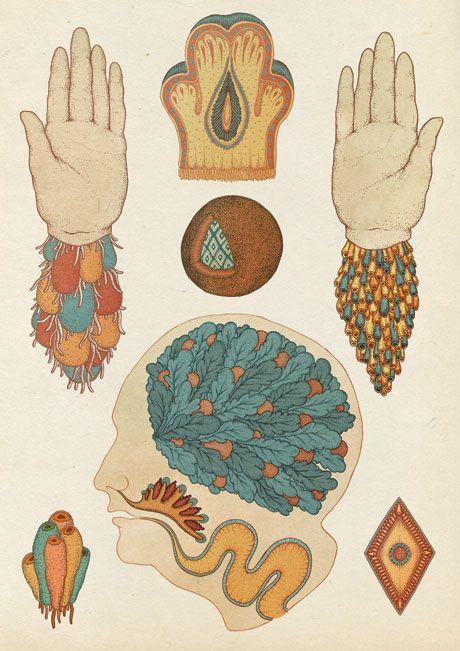 Love the botanical illustration inspired work of Katie Scott
