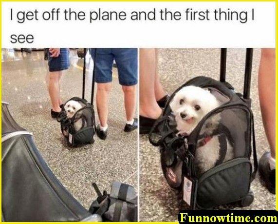 Random Funny Animal Pictures – 22 Pics