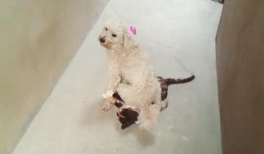 Tomi Sentado Encima De La Gata Kira Perros Gatos Memes Meme Perro Gata Dogs Cats Instagram Photo Photo Instagram