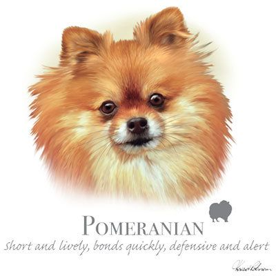 POMERANIAN dog fabric  - Large Picture on One Fat Quarter Fabric Panel for Quilting and Sewing