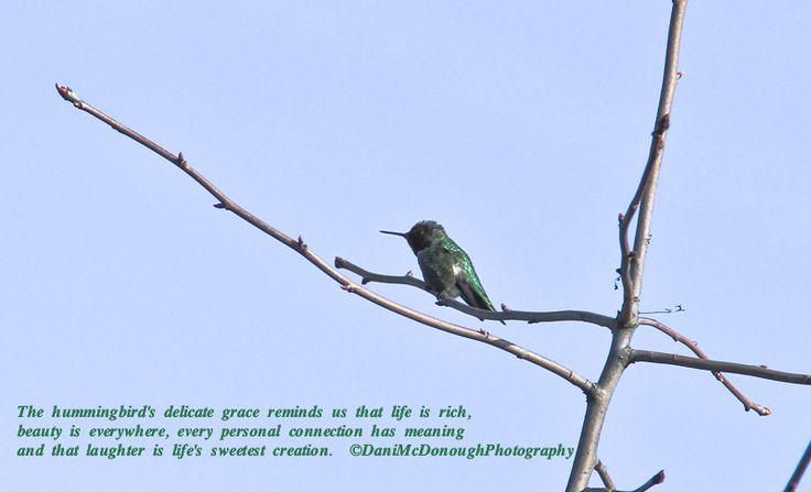 hummingbird quote inspirational quotes pinterest