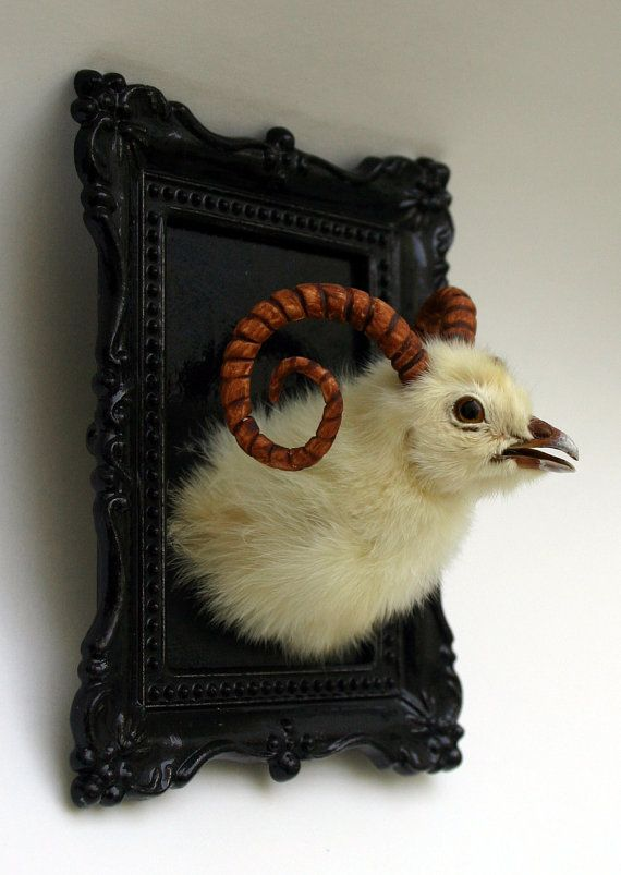 Wall mounted  ram chicken taxidermy  animal mount  trophy in ornate frame by Casper's Creatures