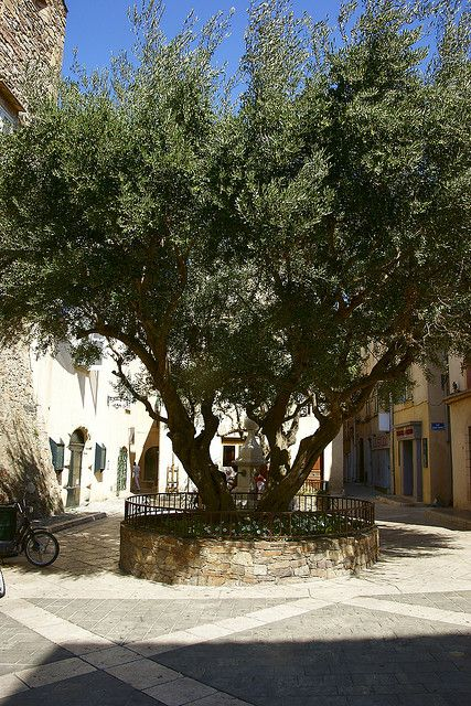 Image result for images of olive trees in french towns