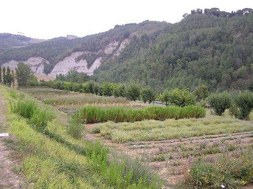 Giardino delle Erbe, Casola Valsenio (RA)