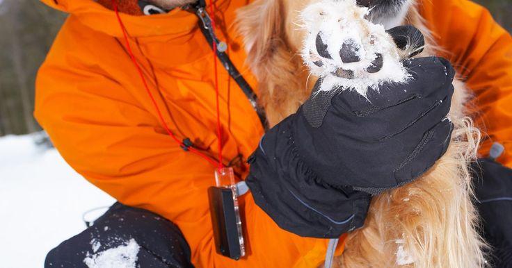 Cómo curar almohadillas agrietadas en las patas de un perro. Caminar con almohadillas agrietadas puede ser muy incómodo para tu perro. Aunque usualmente no es una condición seria, las almohadillas agrietadas tienen que tratarse rápidamente para evitar complicaciones futuras, como sangrado o infección. Existen unos cuantos pasos que puedes tomar en casa para evitar y tratar las sensibles almohadillas de tu ...