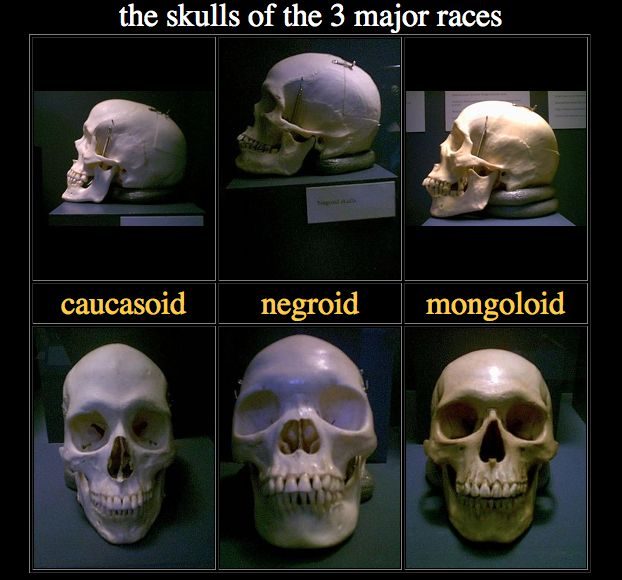 Skull structures different races opinion