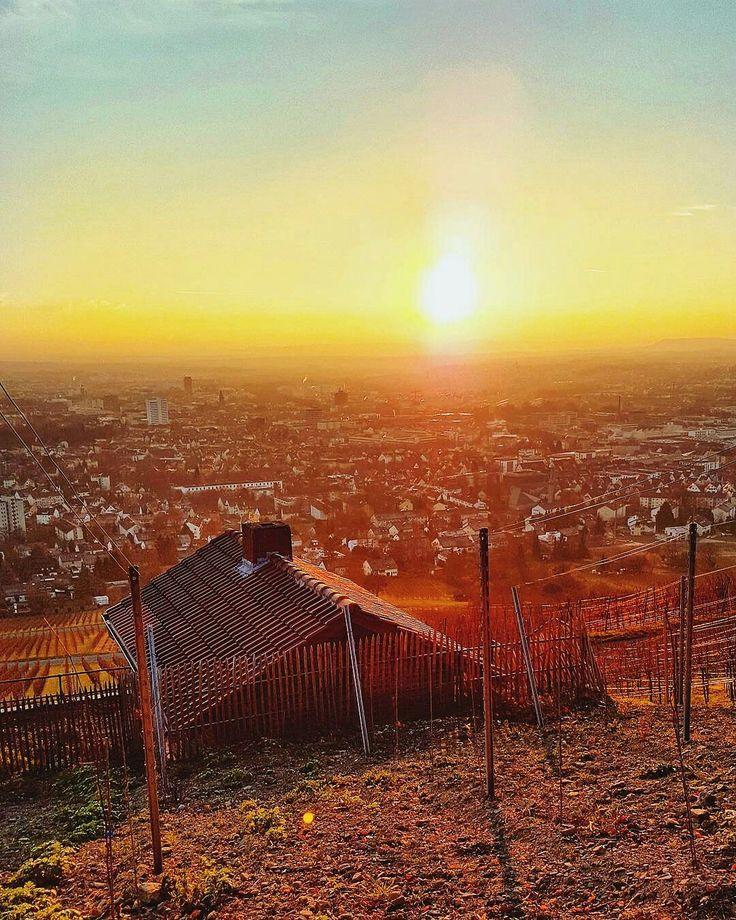 Vineyards just outside of Heilbronn