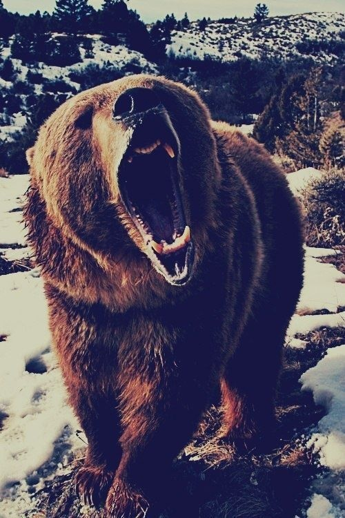 """One of the things u most definately DON""""T want to run into on your nice camping trip, or hike..SHIT!!!!"""