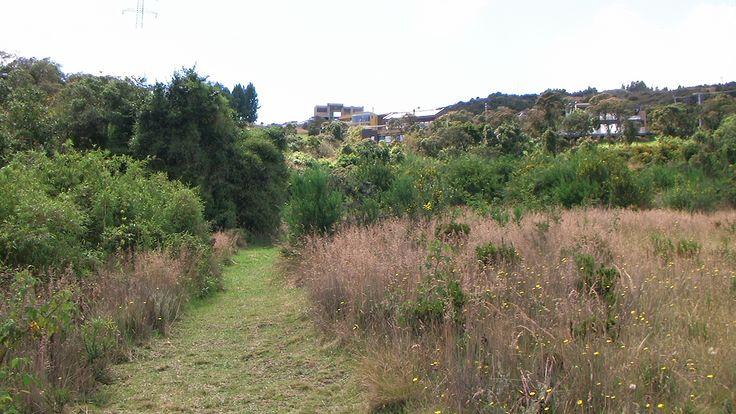 Sendero ecológico  http://www.bosquesdelencenillo.com