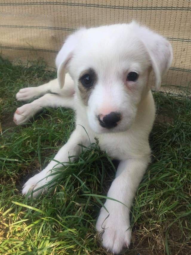 Bild Zoom Hund Adoptieren Tierheim