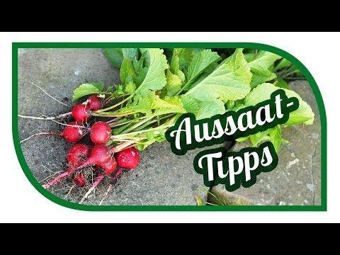 Spinat anbauen im Hochbeet | Zeitraffer | Selbstversorgung im Winter | Autark - YouTube