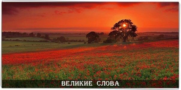 Достаточно крохотного зернышка надежды, чтобы засеять целое поле счастья...