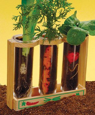 What a great little gift idea for a child. You plant seeds that grow underground plants and watch the roots and vegetables form. Good teacher or parent craft for kids.