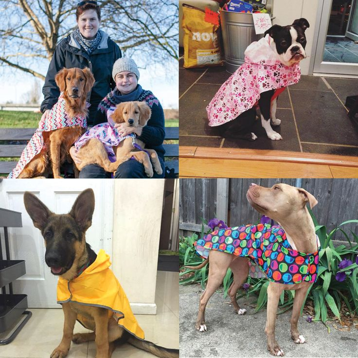 The poncho page Pups! All five of these dogs were found on Instagram. #RCModels