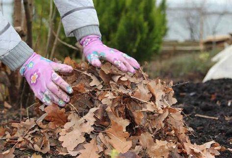 Хотите за короткое время серьезно поднять плодородие почвы и при этом сэкономить деньги? Тогда вам надо приготовить листовой перегной. В отличие от компоста он готовится очень быстро и содержит больше...