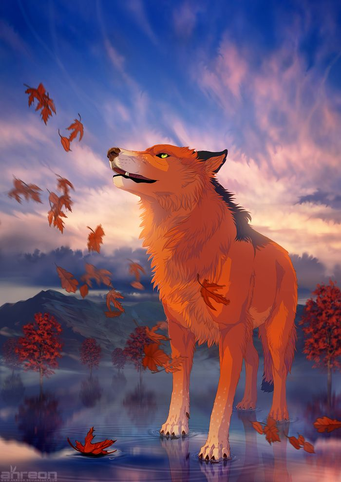 606 best images about Wolves on Pinterest