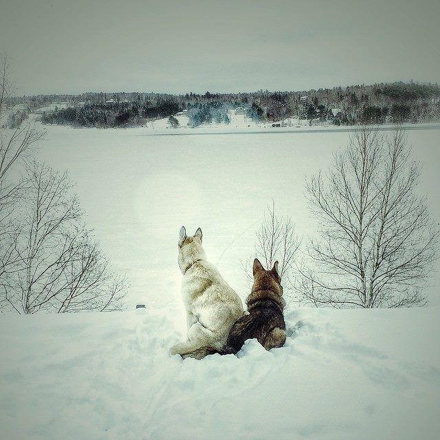 Venez en famille ou entre amis au Nouveau-Brunswick. Découvrez l'hiver, le vrai!  | La faune au Nouveau-Brunswick, au Canada #ExploreNB | Photo: @erica_whitman / Instagram