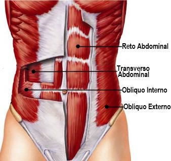 Exercícios para os abdominais Veja aqui a grande maioria dos exercícios existentes para trabalhar os músculos dos abdominais, reto abdominal, oblíquos, etc