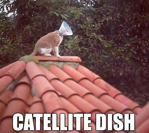 Dish  pictures   Animals Funny  _______________________________   http   www drmauramcgill com http   www fixwomenshealth com  Dish    white   Catellite jordans  red        and