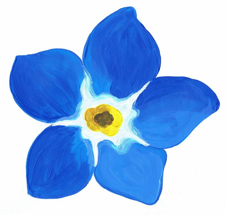 26 best forget me nots images on pinterest drawings forget me flower painting patterns painted study of a forget me not flower i ccuart Image collections