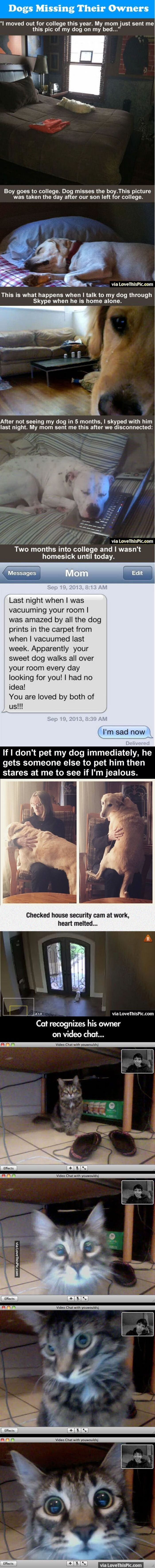 Dogs Missing Their Owners