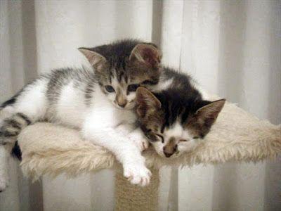 Gatitos: imágenes, informacion y cuidados: Tierna imagen de dos gatitos  [30-11-16]