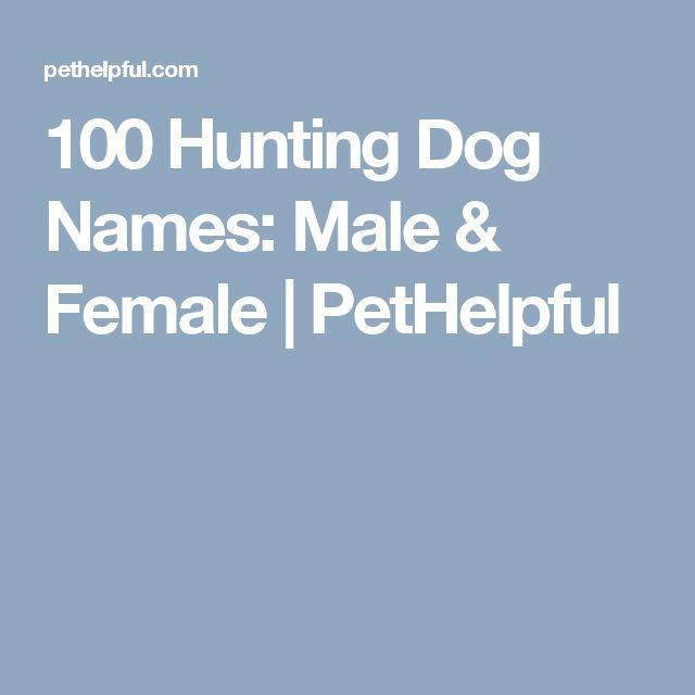 100 Hunting Dog Names: Male & Female | PetHelpful