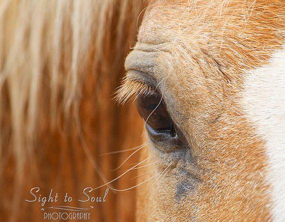 golden horse eye photography equine art cowboy decor palomino horse print rustic