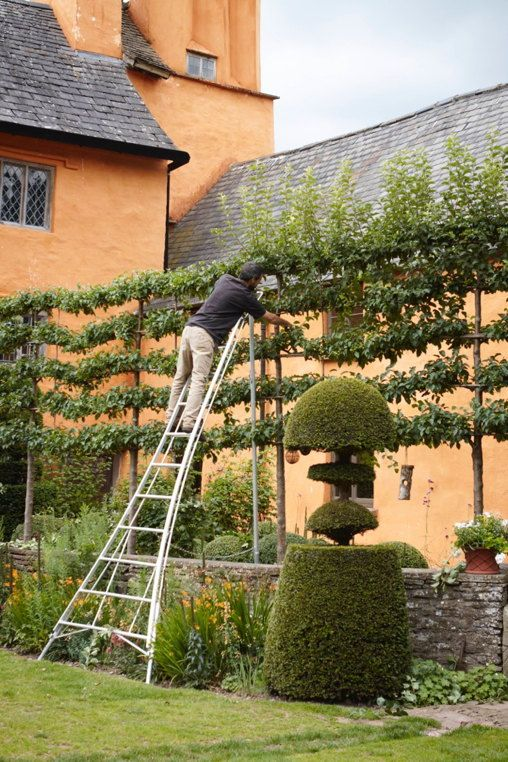 pruning crab apple espalier at Altt-y-bela, Wales. Photo: Britt Willoughby Dyer