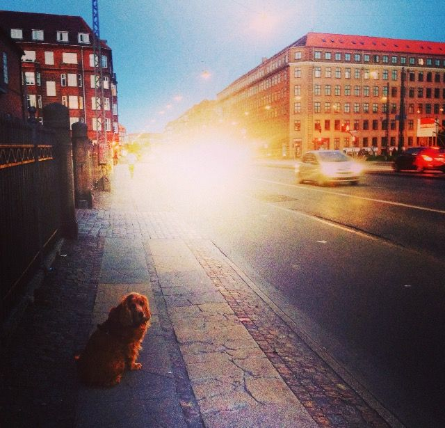 From when we lived in Copenhagen. He loved the town.