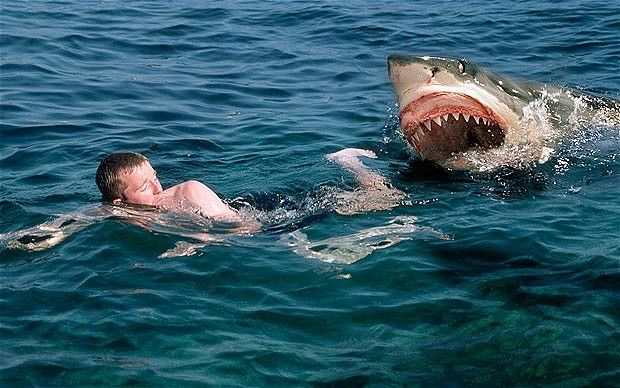 Great Photography | There are three main types of unprovoked shark attack Photo: ALAMY