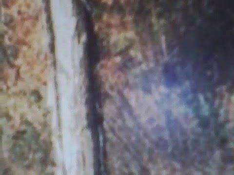 AMAZING LIVE VIDEO OF BIGFOOT